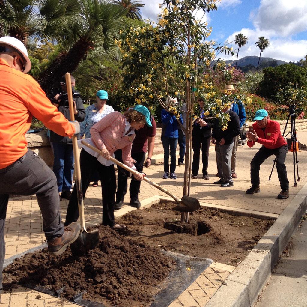 Santa Barbara Beautiful Street Tree Planting Ceremony